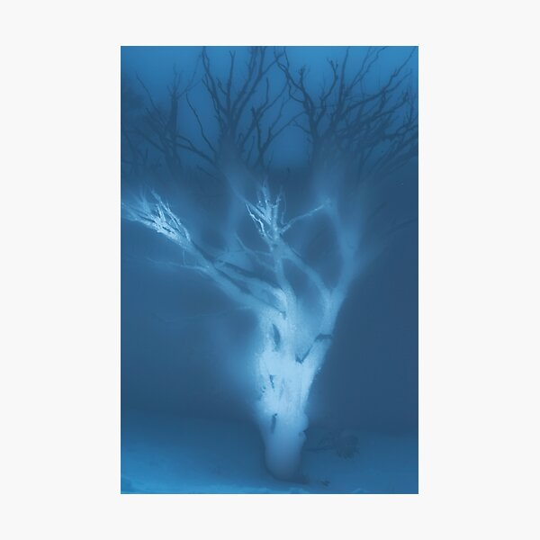 Ghost of a Tree Photographic Print