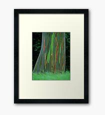 Rainbow Hawaiian Tree Framed Print