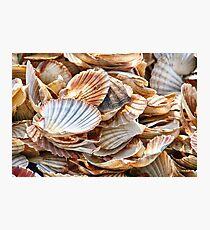 Seashells, Seashells Photographic Print