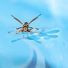 Wasp On Water 2018-1 by Thomas Young