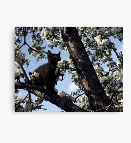 Cat In An Apple Tree Canvas Print