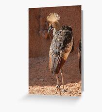 crowned crane Balearica regulorum in the farm Greeting Card