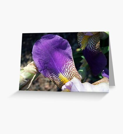 Iris Petal Greeting Card