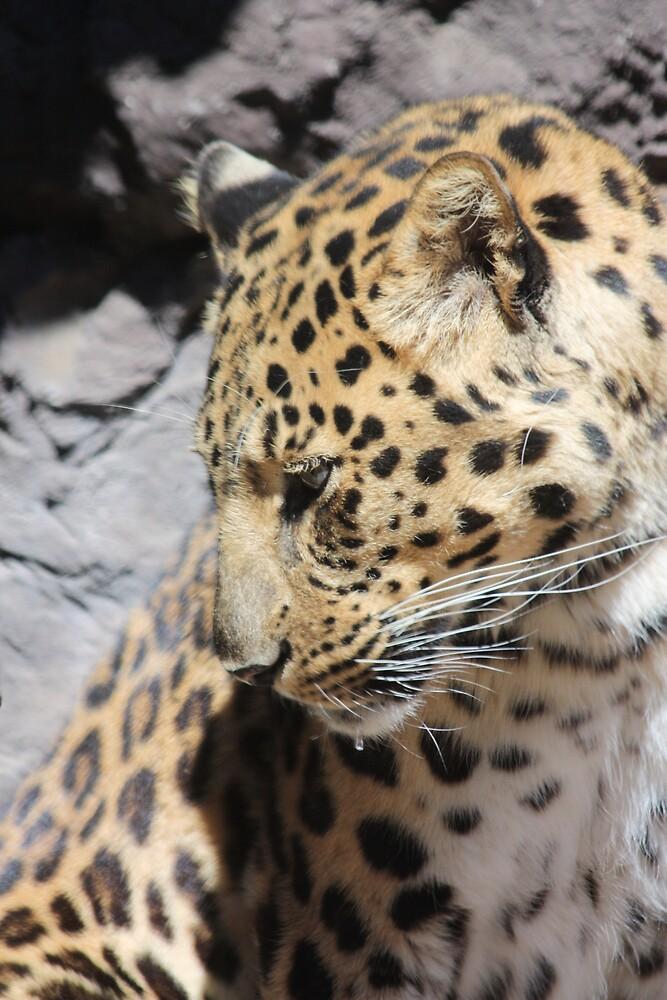 Shy Leopard by CrisPizzio