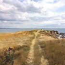 Walk to the Point (Ordrup Strand -Fårevejle, Denmark) by ZannaLea