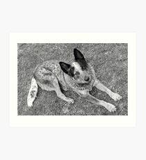 Matthew Flinders Art Print