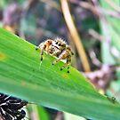 Itsy Bitsy Spider by Raquel Perryman