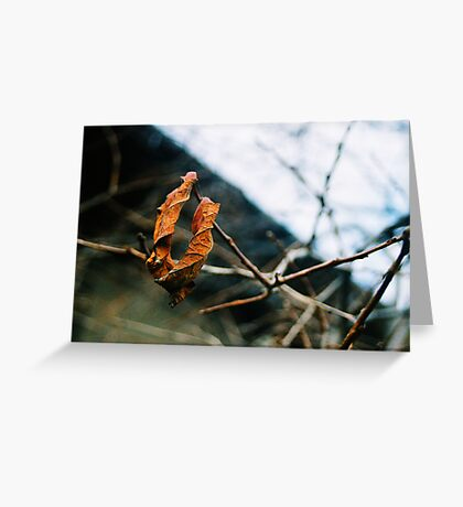 Last Day Of Autumn Greeting Card
