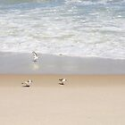 Shorebirds on the tropical beach by Zina Stromberg