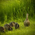 mother of five by Aimelle