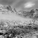 Snowy Desert by Aaron  Cromer