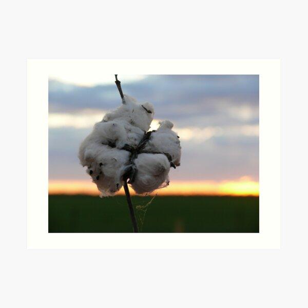 Cotton Fields back Home (1) Art Print