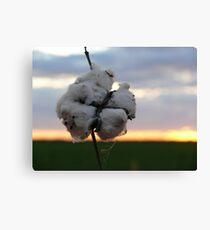 Cotton Fields back Home (1) Canvas Print
