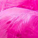 Fairy Feathers by Lyndy