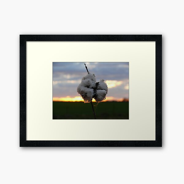 Cotton Fields back home (2) Framed Art Print