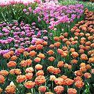 Pink and Orange Frilled Tulips - Keukenhof Gardens von BlueMoonRose