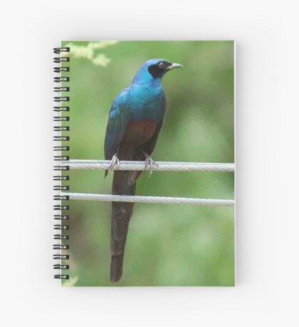 Large Glossy Starling – Lamprotornis australis Spiral Notebook