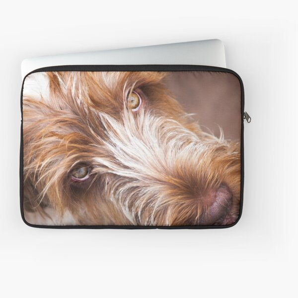 Gazing up Spinone Laptop Sleeve