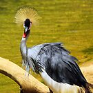 Grey Crown Crane by jackitec