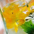 «Flor en apnea» de lucielitchi