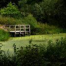 The Pond by Jeremy Lavender Photography