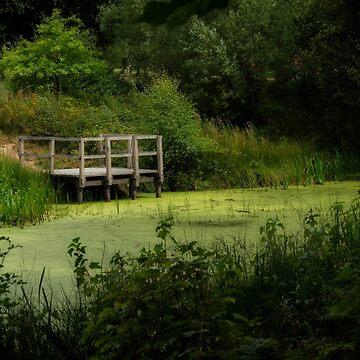 The Pond by 242Digital