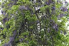 Wisteria Takes Over The Woods by MotherNature