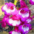 Purple Haze by DebbieG