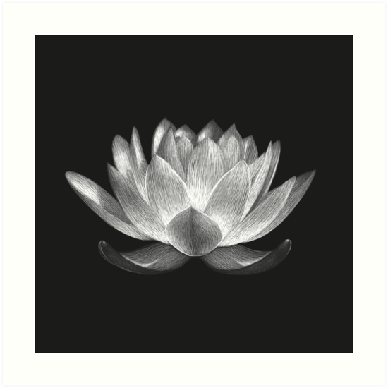 Lotus by kateadamsart