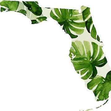Florida Palm by coleenross