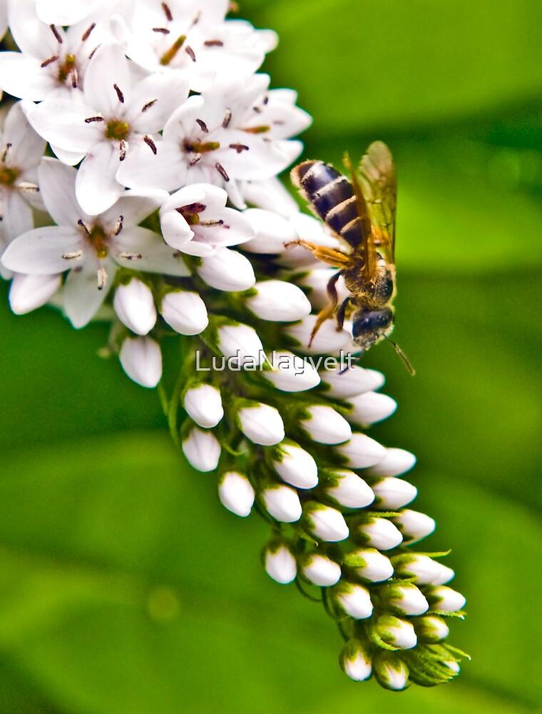 Working Bee by LudaNayvelt