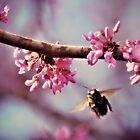 Biene im Rosa von Dawne Dunton