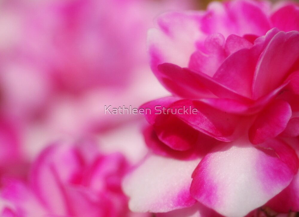 Abstract Pink by Kathleen Struckle