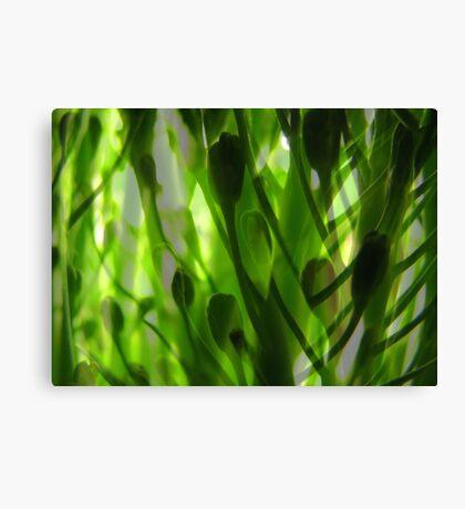 Broccoli Forest Canvas Print