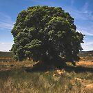Sally Gap Tree by Shay Murphy