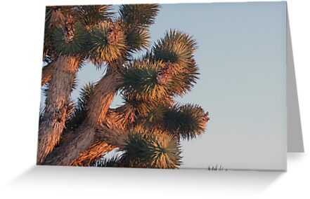 Joshua tree detail at sunset, Cima Dome, CA by Chris Clarke