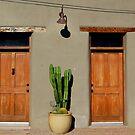 Neighbors by AsEyeSee