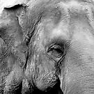 Elephant's Worry by Shannon Kennedy