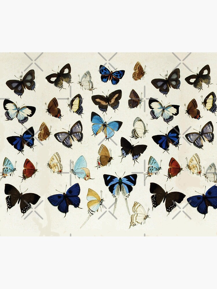 COLORFUL BUTTERFLIES Blue White Beauty Nature Collection by BulganLumini