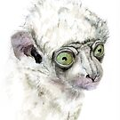 Baby Sifaka by Joel Borgerson