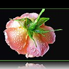 Orange Wildfire - Raindrops on Rose in Reflection Frame by BlueMoonRose