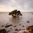 Timeless tree by Tony Middleton