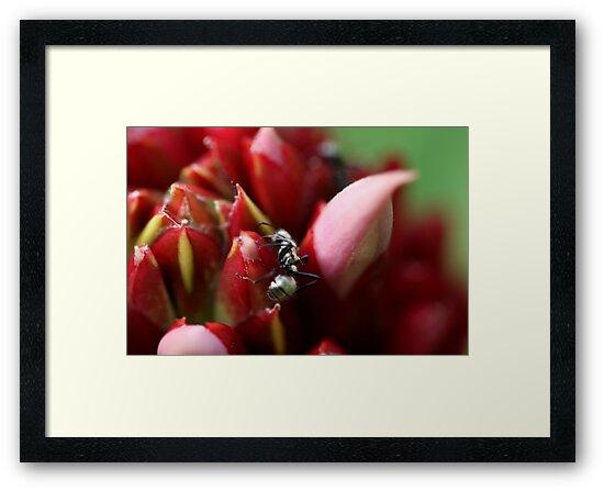 Daintree Ant by HeatherEllis