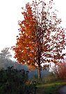 Autumn Transformations by Jaeda DeWalt