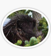 Porcupine Hug Sticker