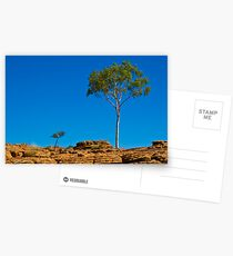 Lone Tree Postcards