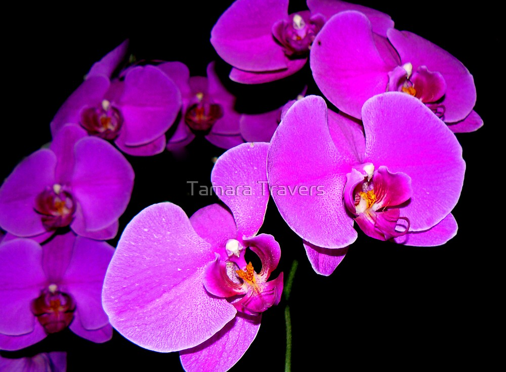 Purple bunch by Tamara Travers