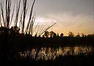 Silhouetted Twilight  by Jaeda DeWalt