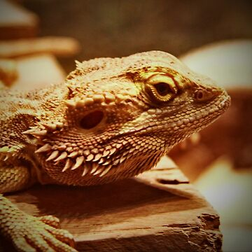 Bearded dragon lizard by AlexDu