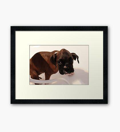 Es ist Badezeit - Boxer Dog Series Gerahmter Kunstdruck